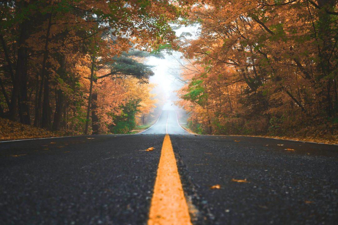 Road in fall